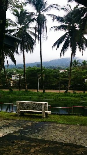 Africa Travel Travelphotography Flowers Of EyeEm Cameroon No People Beauty In Nature Plant Outdoors Nature Limbe Vacations Landscape Mountain Landscape River