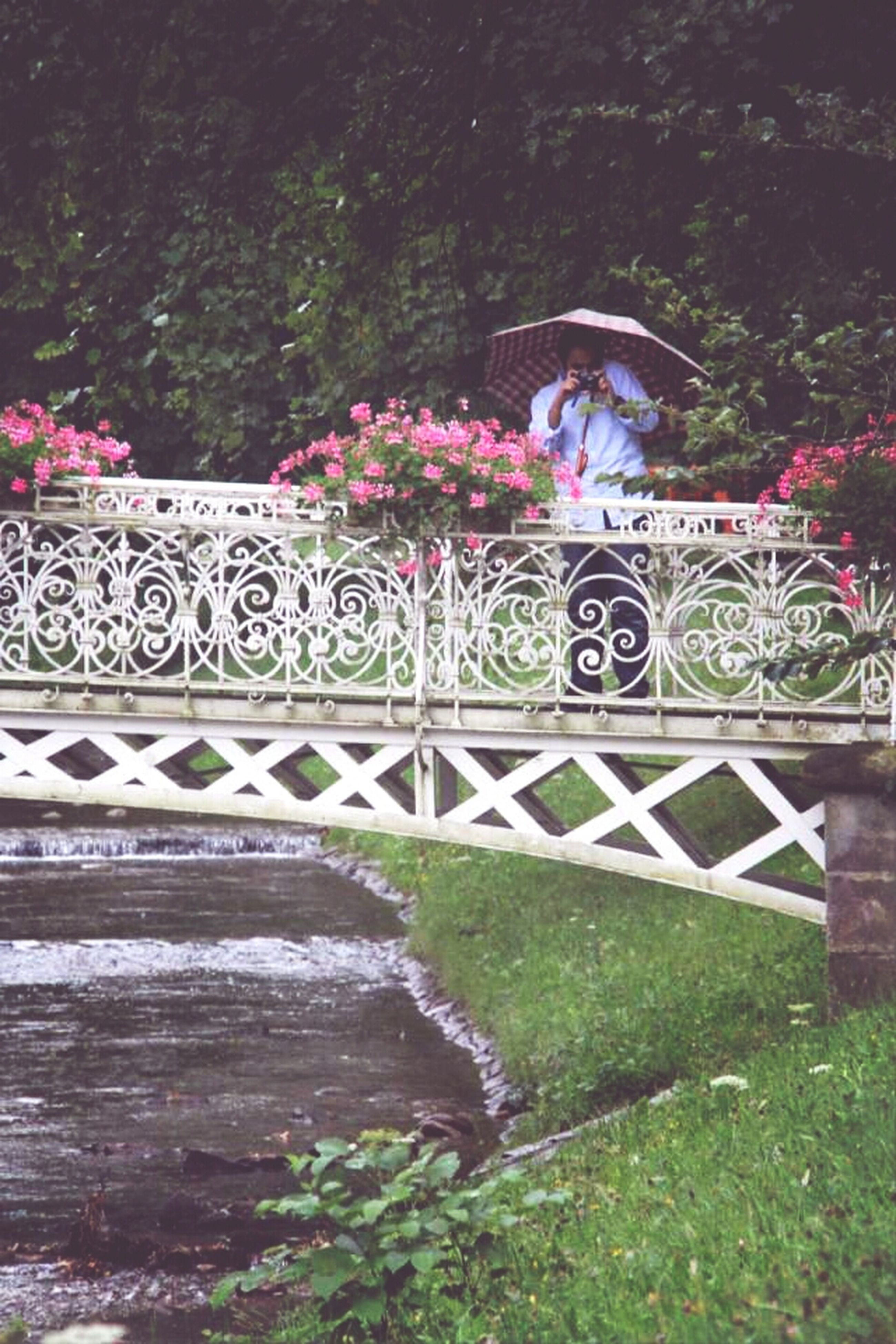 built structure, plant, tree, architecture, railing, outdoors, bridge - man made structure, nature, park - man made space, no people, growth, day, water, flower, wall - building feature, steps, beauty in nature, multi colored, sunlight, tranquility
