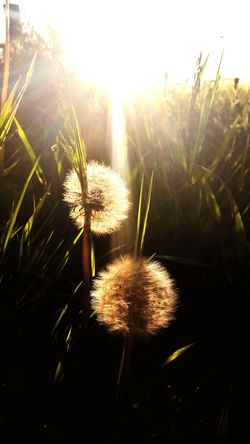 Seeds Taking Photos Relaxing Flowers Rays Of Light Cool