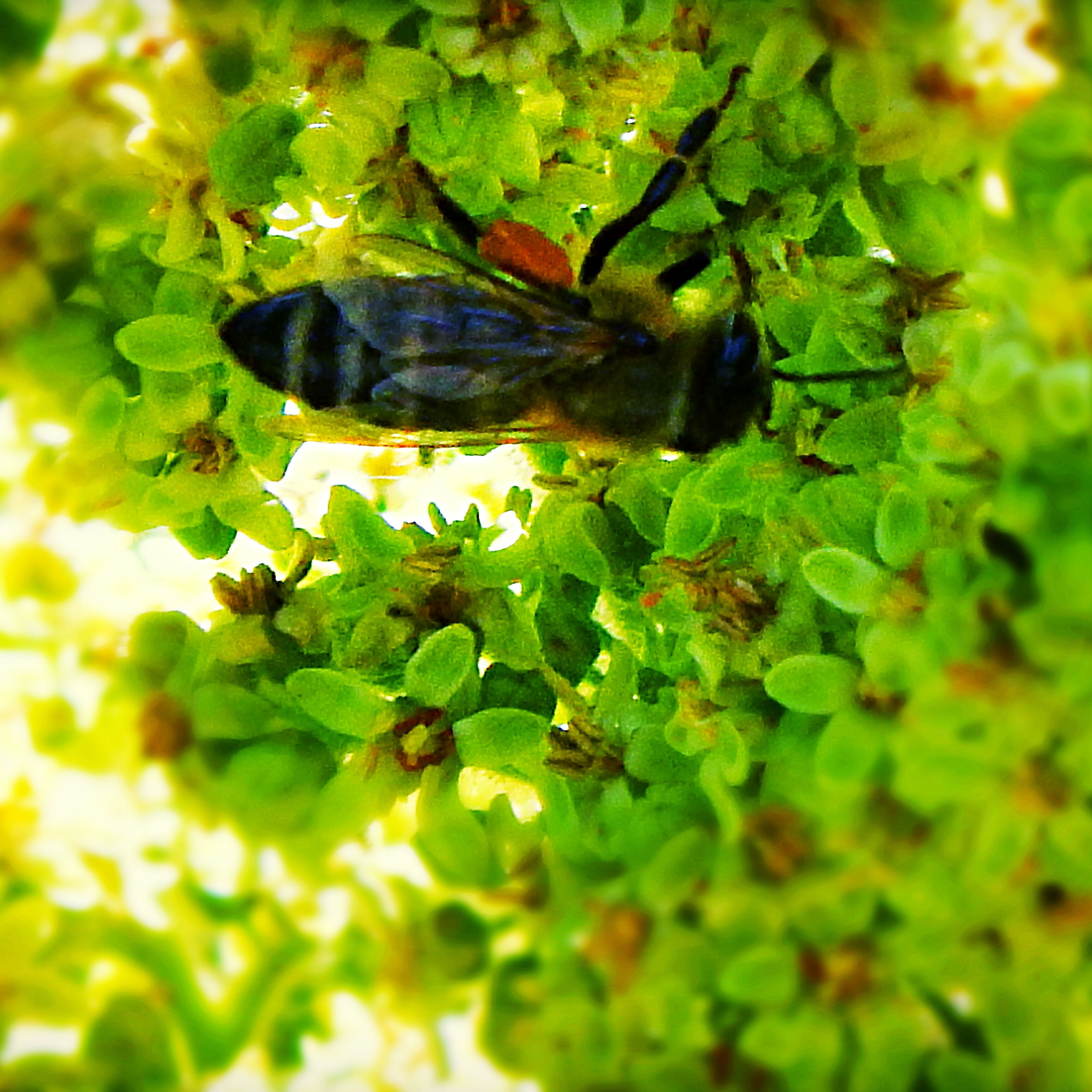one animal, insect, animal themes, animals in the wild, green color, leaf, plant, nature, wildlife, growth, close-up, no people, day, outdoors, fragility, beauty in nature, flower