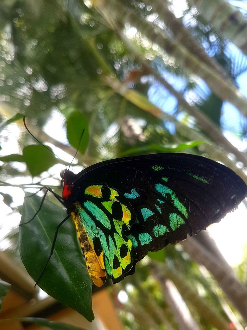 Butterfly - Insect Animals In The Wild Day Nature Tree No People Multi Colored Branch Close-up Beauty In Nature Outdoors Plant green yellow black red