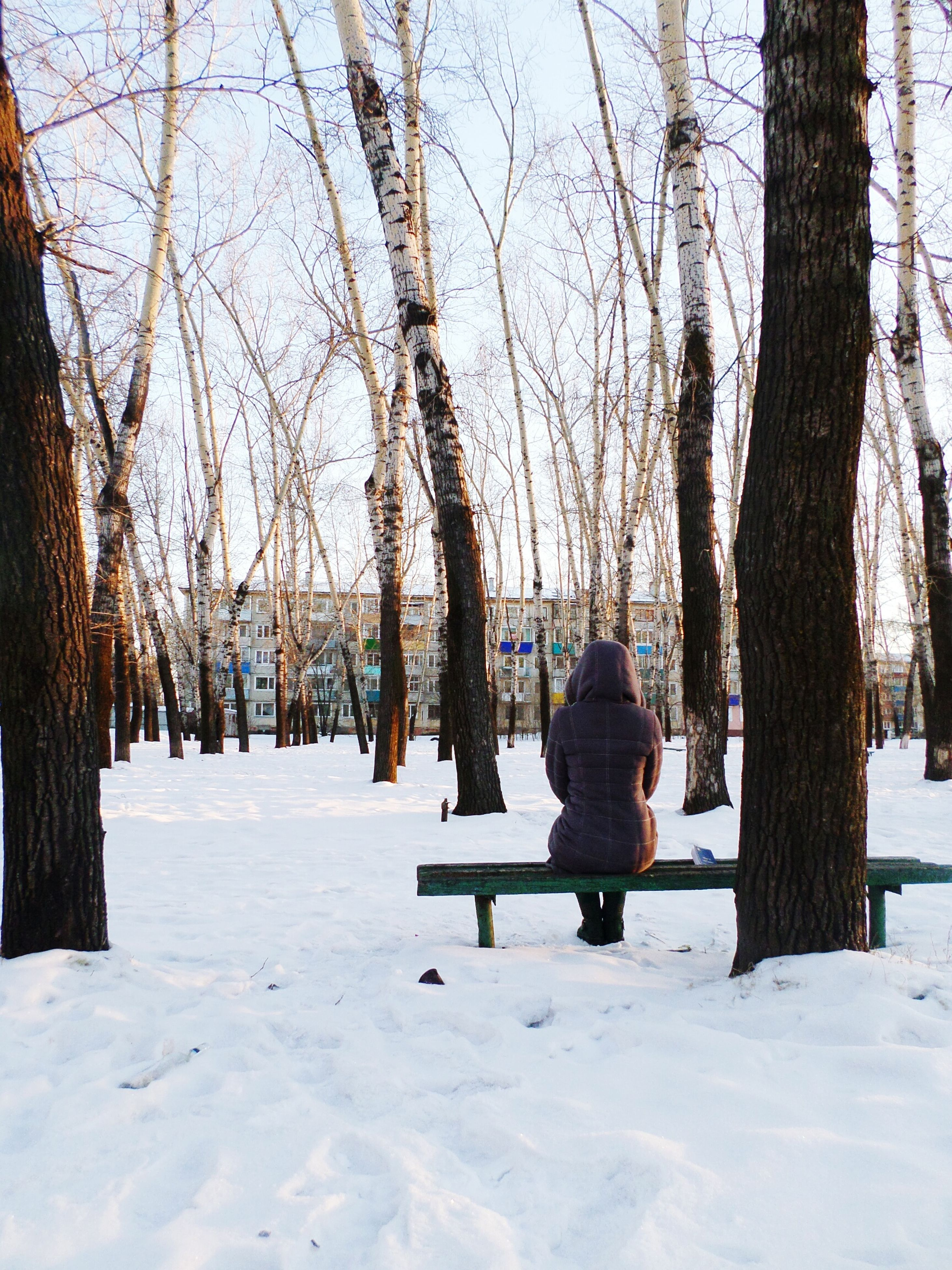 winter, snow, cold temperature, season, tree, weather, lifestyles, leisure activity, tree trunk, rear view, covering, full length, nature, tranquility, landscape, warm clothing, walking