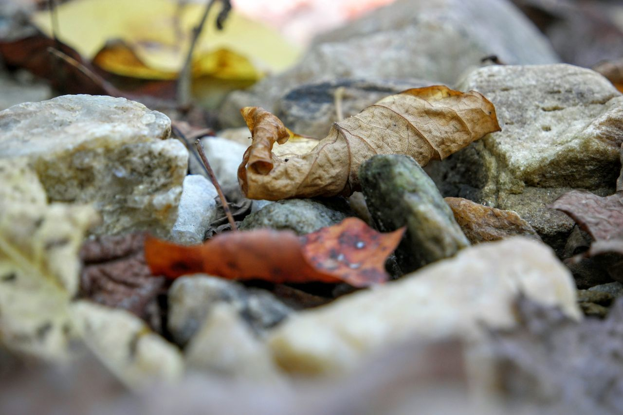 Autumn Brown Close-up Detail Autumn Leaves Natural Pattern Organic Part Of Rough Selective Focus Still Life Rocks
