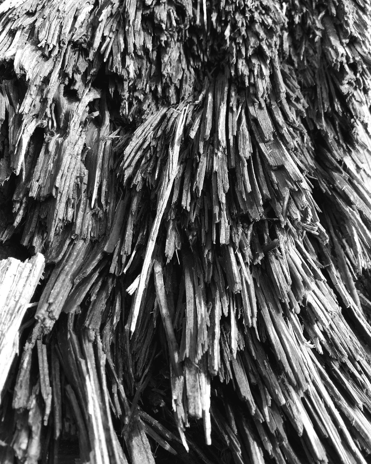 Abstract Nature Textured  Full Frame Close-up Backgrounds Nature Outdoors Fallen Tree Abstractions Landscape Layers And Textures Natural Collages Shapes And Forms Wood - Material Tree Pattern Complexity Patterns In Nature Textured  Black And White
