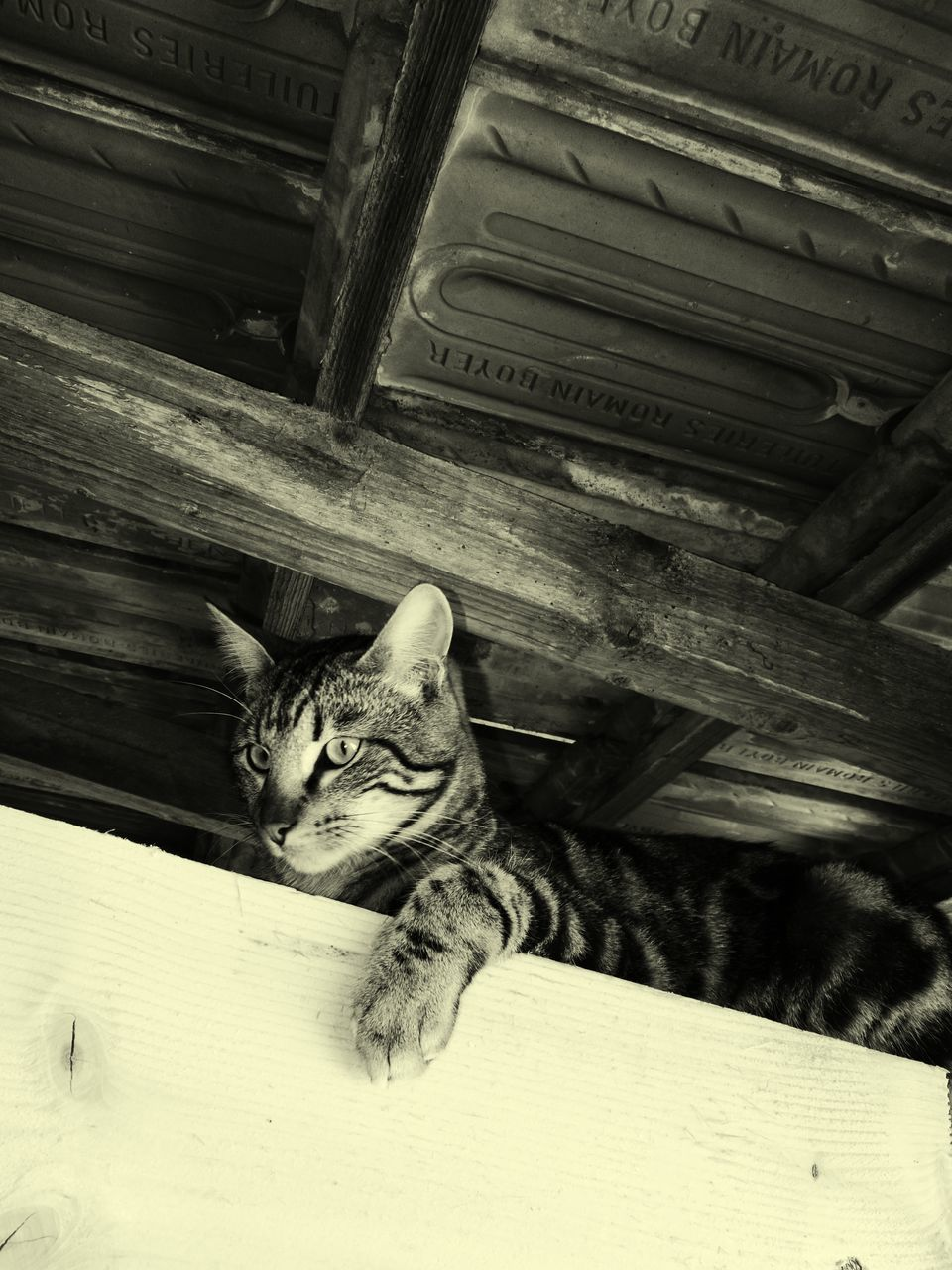 domestic cat, domestic animals, pets, animal themes, feline, mammal, cat, one animal, no people, indoors, sitting, whisker, day