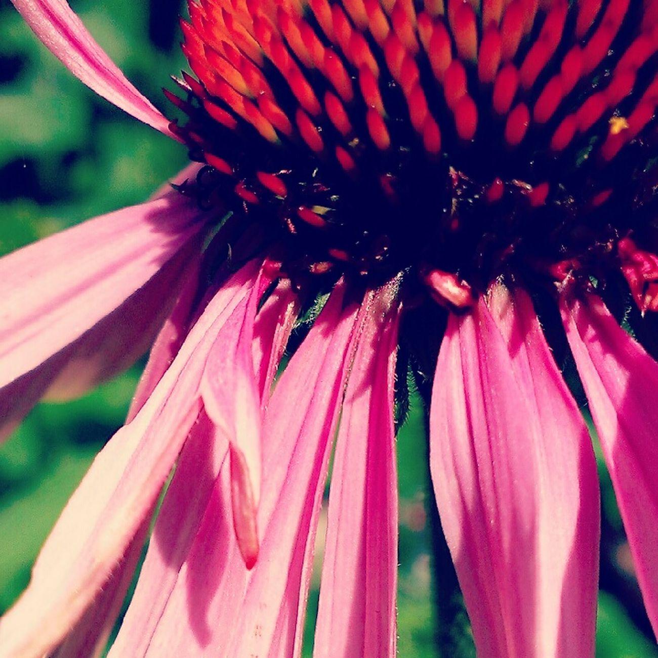 colour version Summer Nature Flower Pink