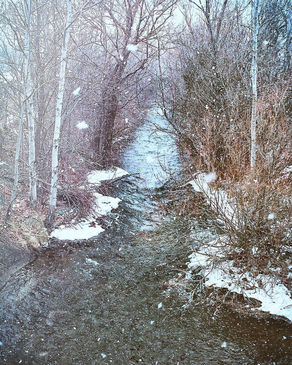 CambridgeOntario Warm Winter 2016 DesrochesPhotography SeasonalView Beautifulcolours Riverflow Photo TriCityMovement PerfectCapture Showcase: February