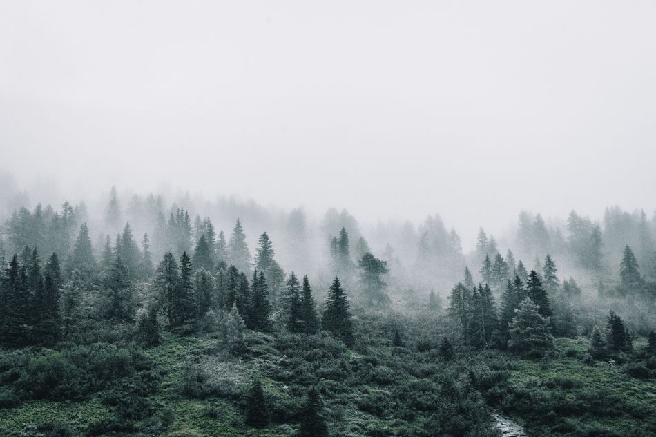 Beautiful stock photos of forest, Isolation, beauty In Nature, clear Sky, day