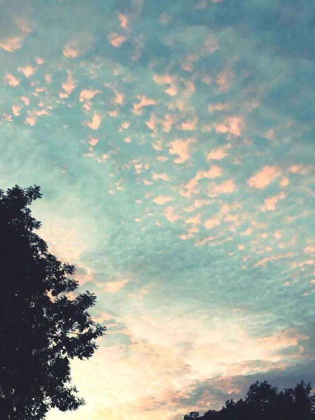 Sky Clouds Urban 3 Filter Evening Sky Pink Clouds Tree Tops
