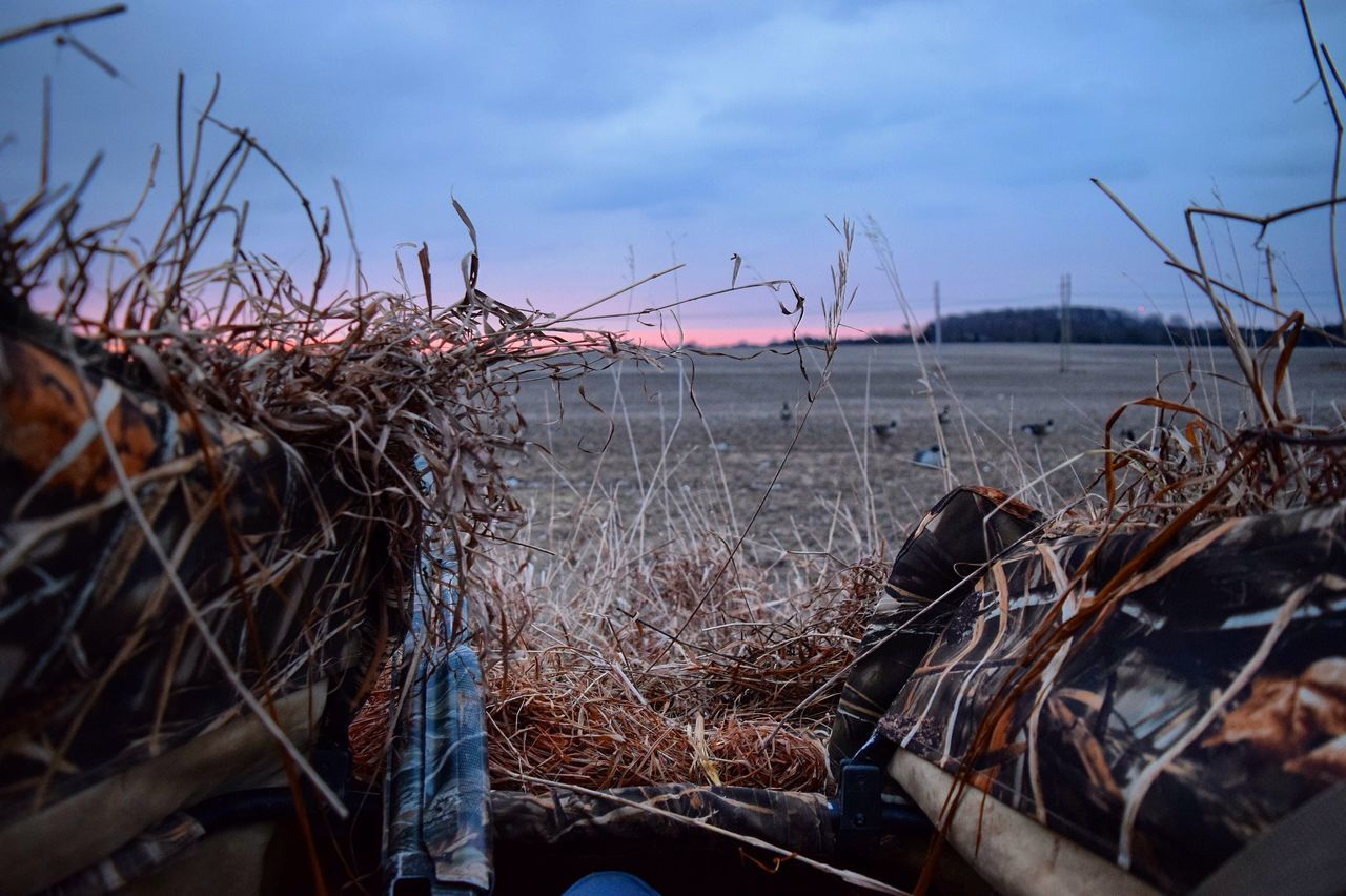 Goose hunting blind Hunting Canada Nature Goosehunting Blind Market D3300 Ontario