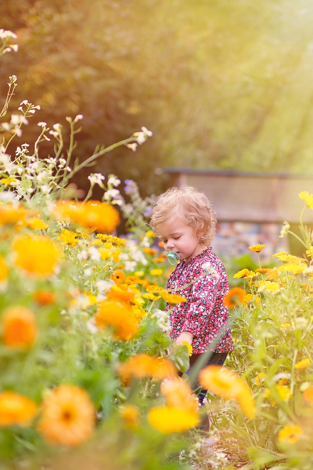 Beautiful stock photos of garden,  18-23 Months,  Baby Girls,  Blond Hair,  Botany