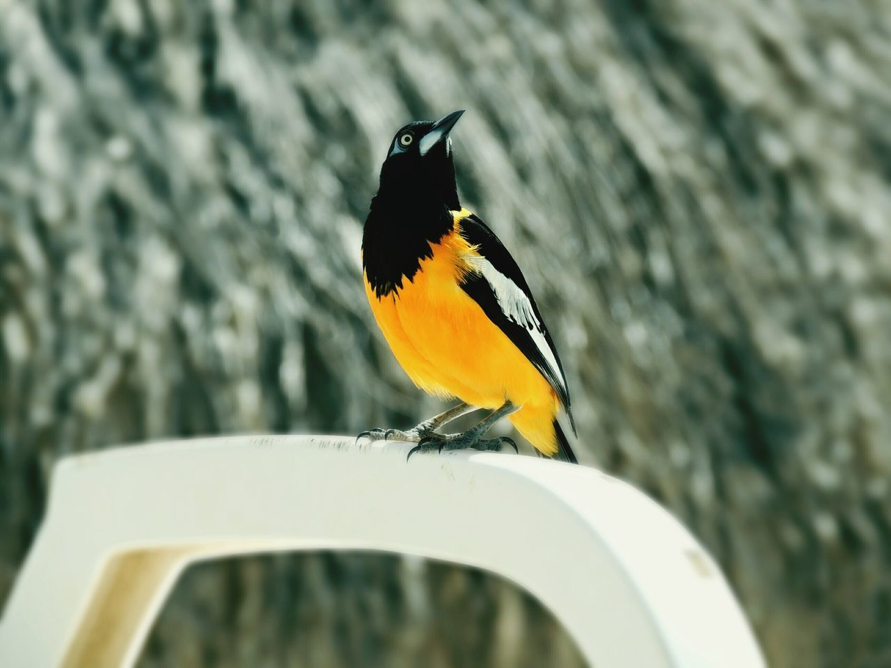 Bird Bird Photography Island Curacao Curacao (willemstad) First Eyeem Photo