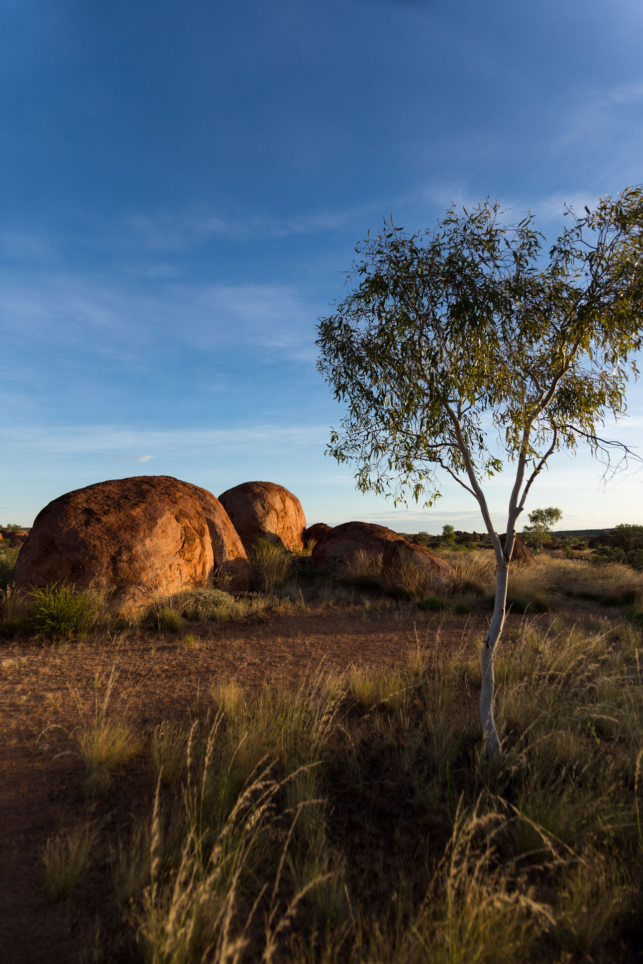 Sunset at the Devils Marbles, Australia. Incredible atmosphere between those unreal rock formations. They look as if they are burning in the sunlight. Bare Tree Beauty In Nature Day Devils Marbles Grass Karlu Karlu Landscape Light And Shadow Nature No People Outdoors Rock - Object Rock Formation Scenics Sky Sunset Tranquil Scene Tranquility Tree