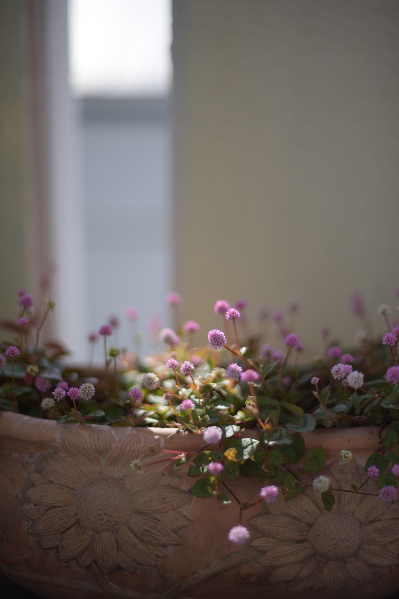 Flower EyeEm Flower