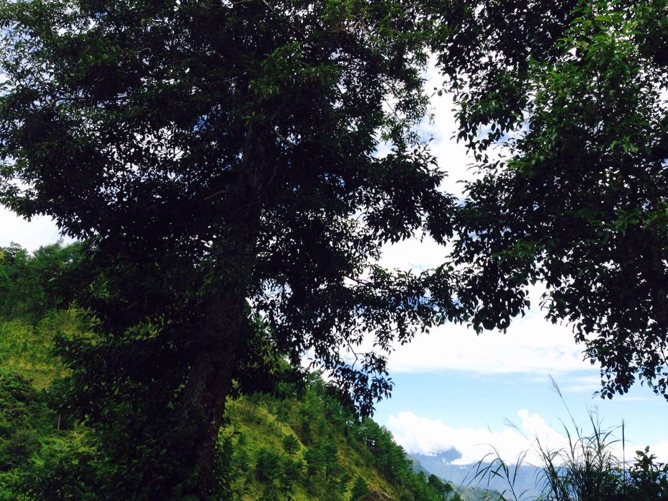 Mountains Mountain Tree Trees Sunny Day Bright Day IPhoneography The Week On Eyem
