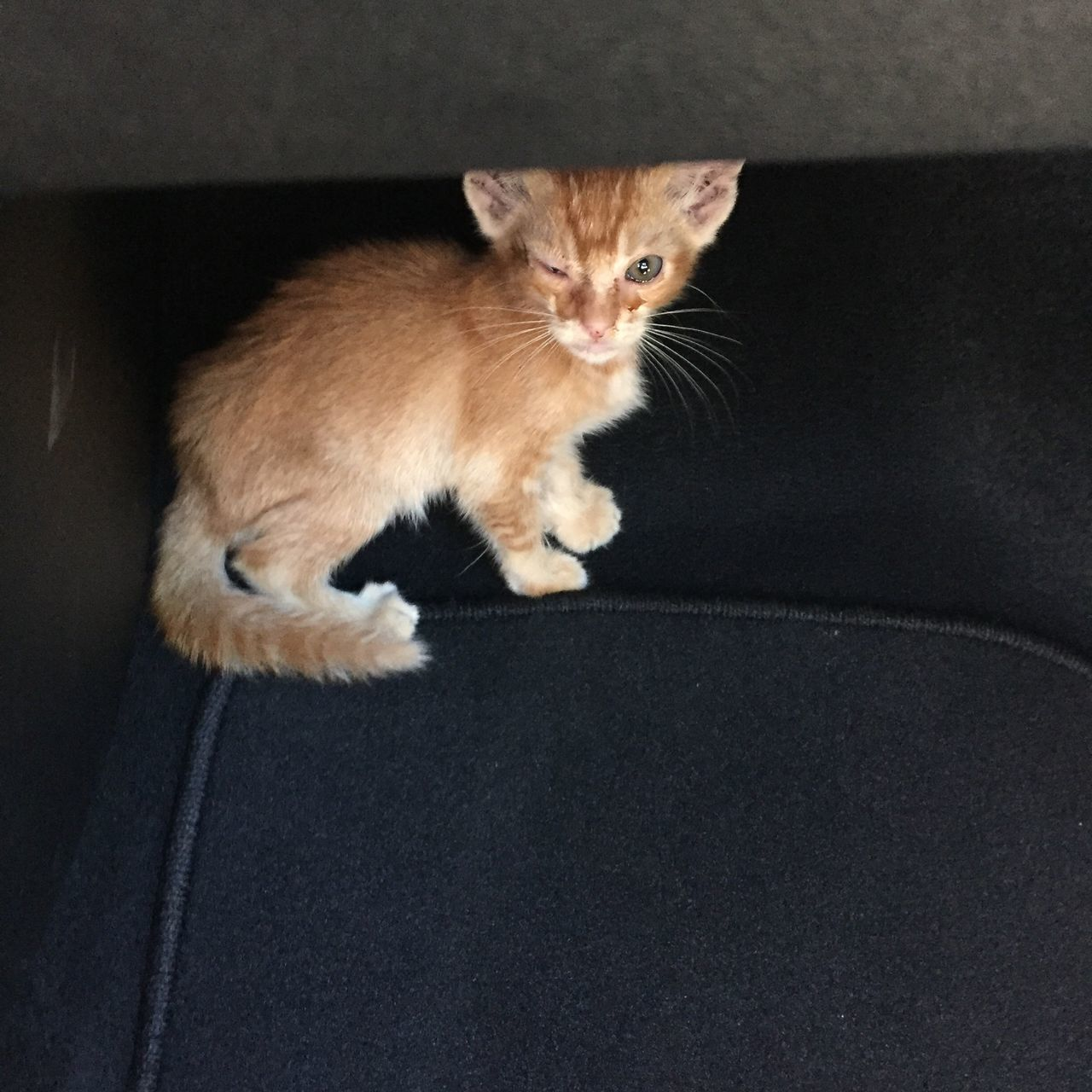 I found two kittens under a car wheel. I couldn't leave them. Drove forty mins to the spca. Shame on people Sad Cat Cats Cat Lovers Spca Rescuecat Streetphotography Street Hawaii Oahu Hawaiishots Taking Photos Oahu, Hawaii Pets Of Eyeem Pets Animals Animal Photography Animalphotography