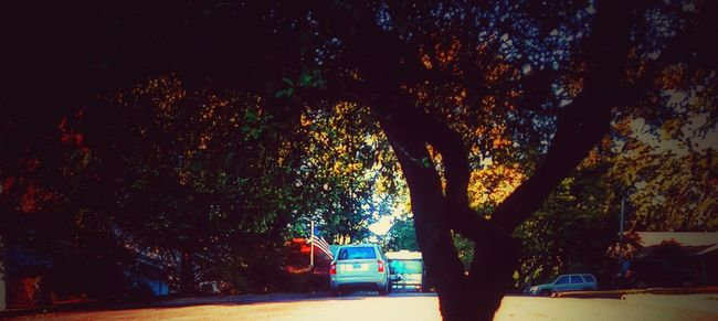 Trees Street Neighborhood Houses Road No People Culdesac Nature_collection Showcase July Nature Leaves Colors Colorful Gritty Neighbors EyeEm Best Edits EyeEm Nature Lover Check This Out Taking Photos Hello World End Of The Road Trees And Sky My Point Of View Outdoors Outside