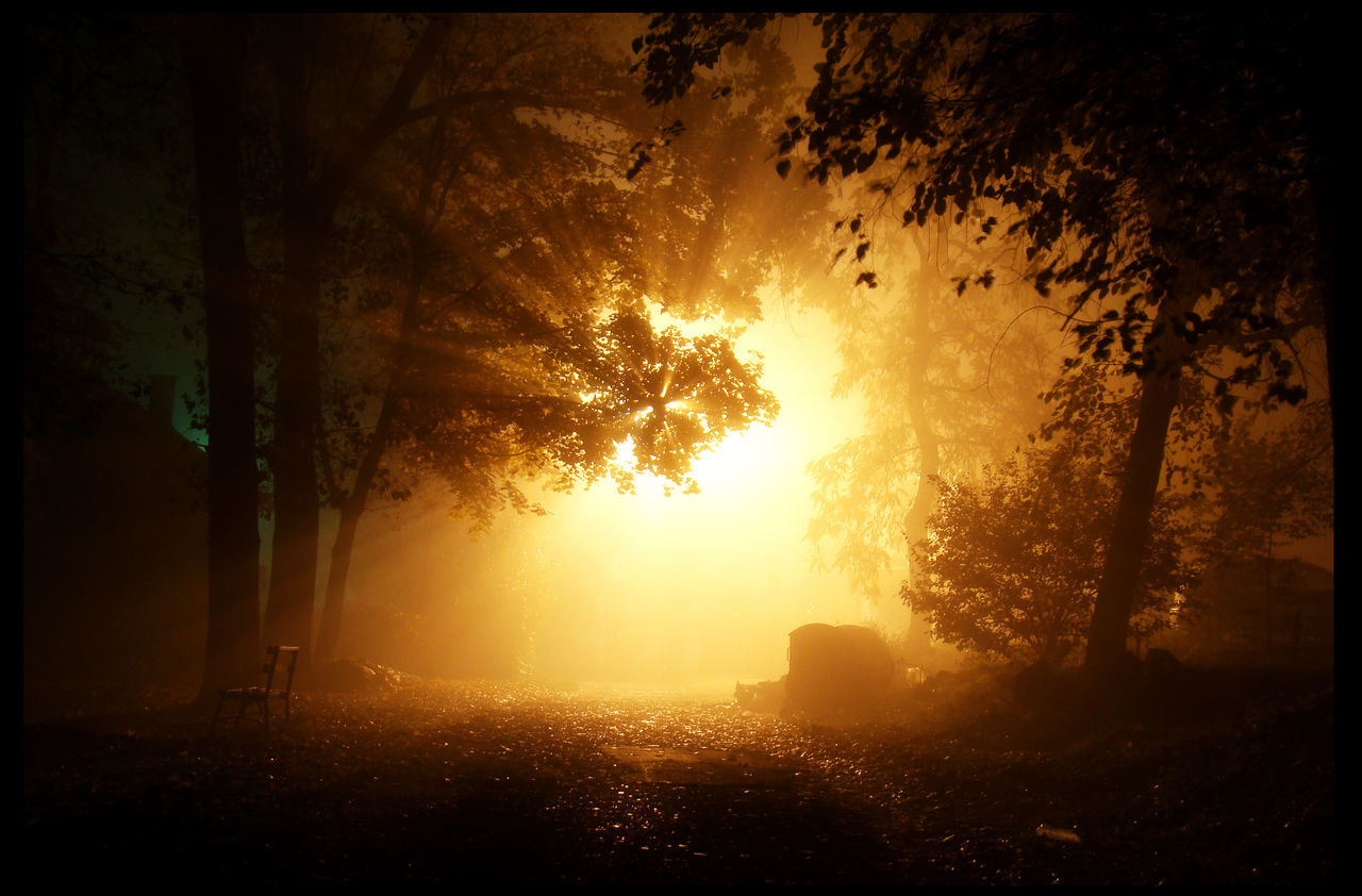Atmosphere Atmospheric Mood Dark Alley Dark City Dark Street Darkness And Light Glowing Light Shining Through Light Shining Through Trees Majestic Mysterious Mystery Night In Town  Ominous Trees Orange Color Something Lurking Yellow Light