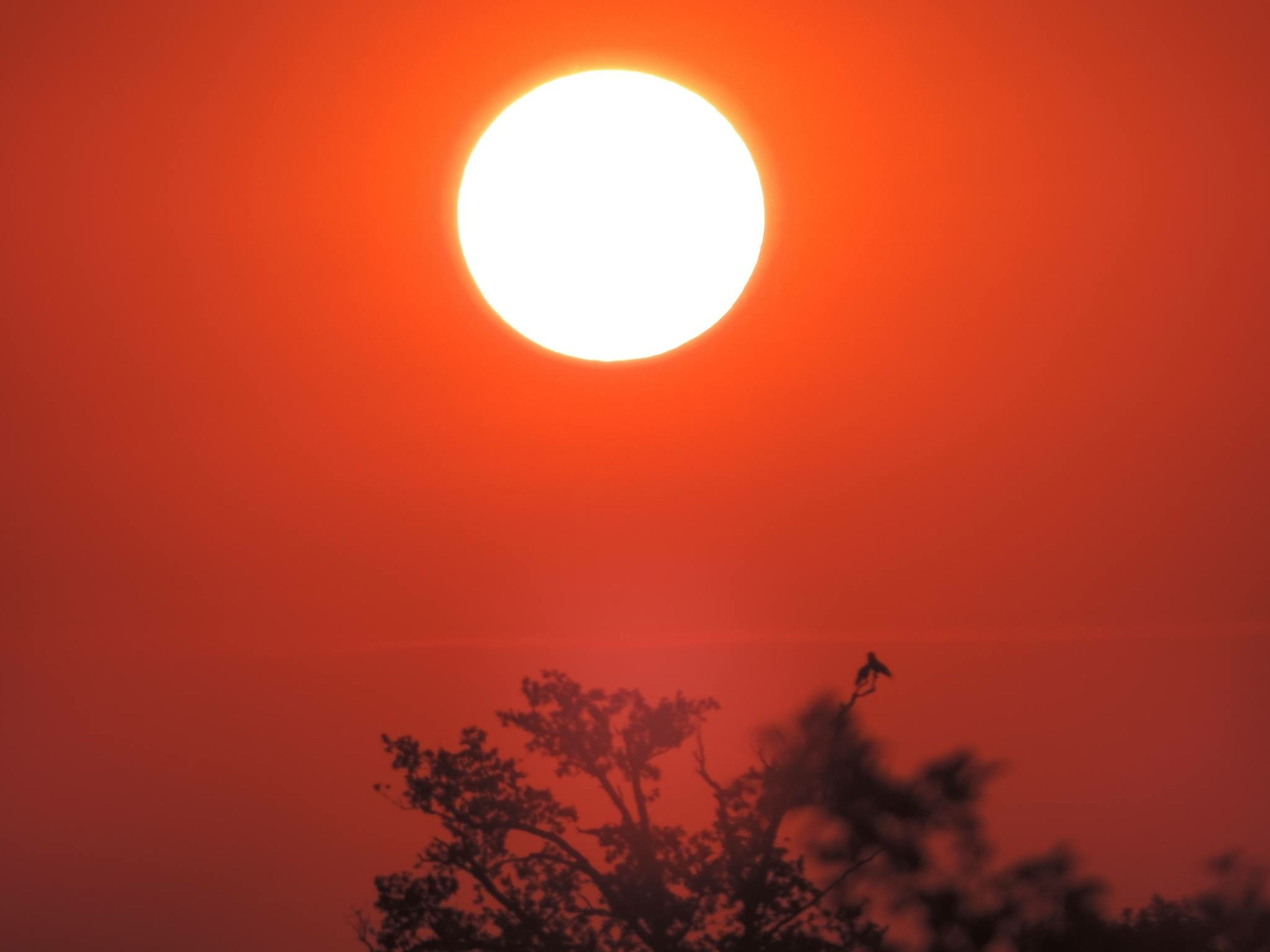 sunset, sun, orange color, low angle view, sky, beauty in nature, silhouette, scenics, clear sky, red, nature, tranquility, copy space, circle, tranquil scene, idyllic, no people, outdoors, flying, sunlight