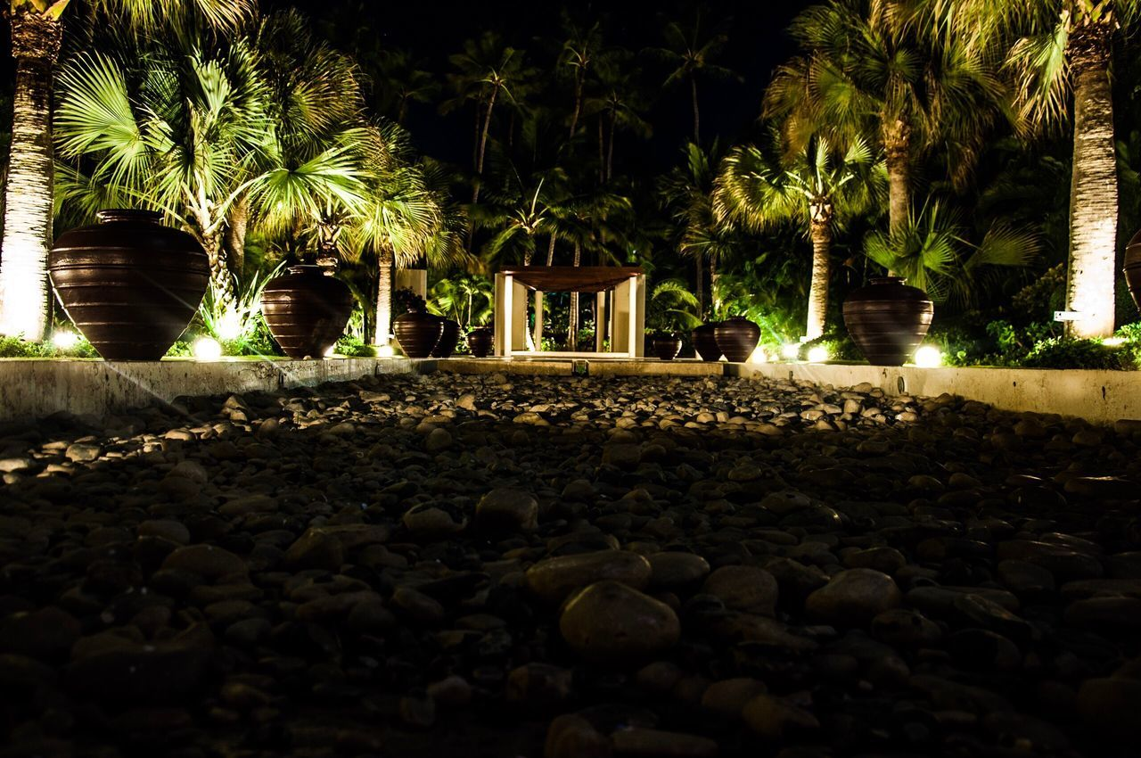 palm tree, tree, night, outdoors, no people, nature, close-up