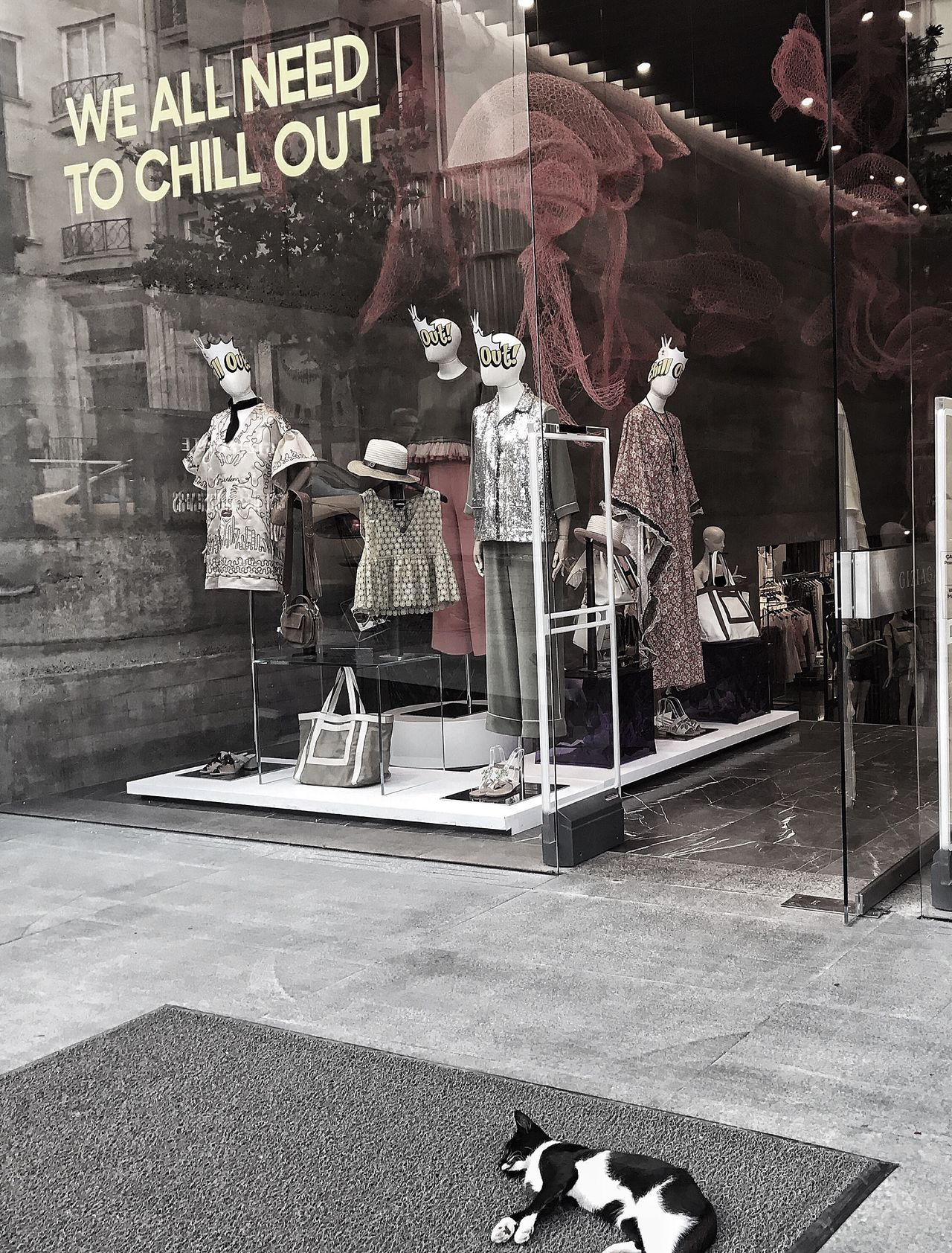 We all need to chill out Text No People Day Cat Shop Windows