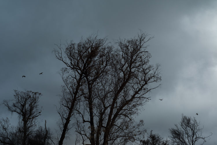 Cloud Moody Sky Winter Animal Themes Animals In The Wild Bare Tree Beauty In Nature Bird Day Flying Low Angle View Nature No People Outdoors Scenics Sky Spread Wings Tranquility Tree