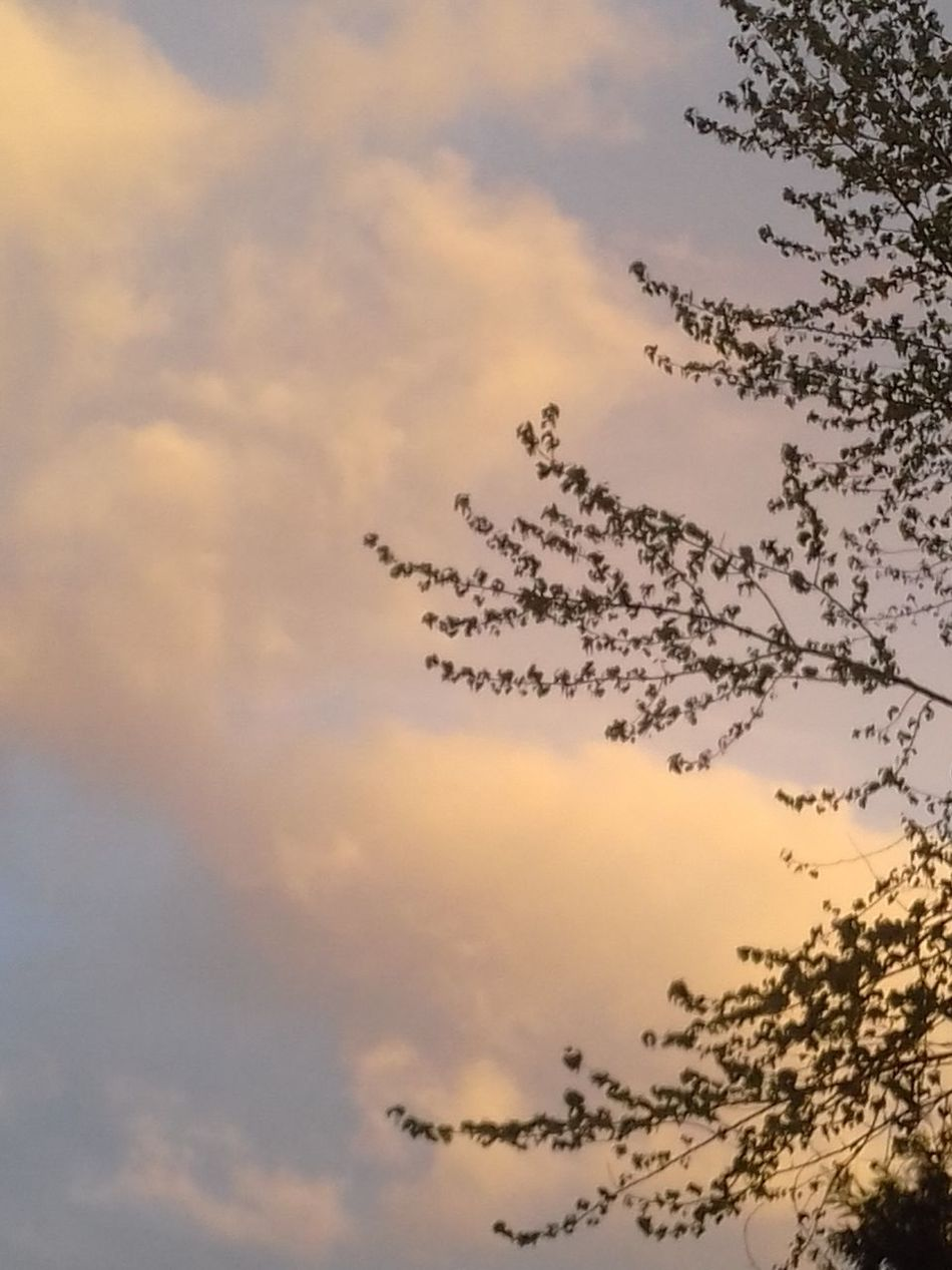 Dusky Sky Beauty In Nature Sunset Scenics Backgrounds No People Branches