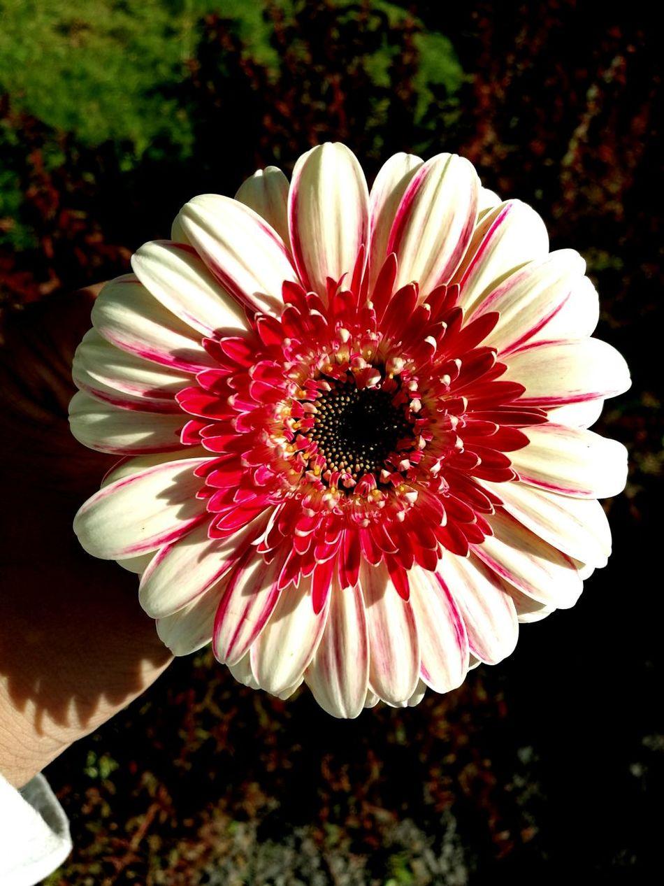 Beautiful flower, photo taken by my sis...
