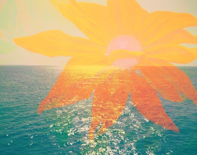 Layered photos.... Photo Art 📷🎨 Sunrise&sunset Flower Power🌼 East Coast Beauty Martha's Vineyard The Innovator