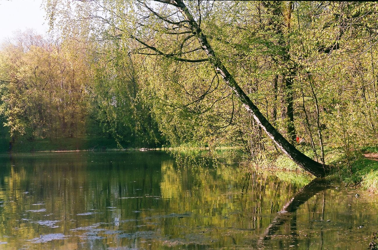 #birchtree #film #film Photography #Filmcamera #filmphotography Beauty In Nature Branch Day Forest Growth Lake Nature No People Outdoors Reflection Scenics Sky Tranquil Scene Tranquility Tree Water Waterfront The Great Outdoors - 2017 EyeEm Awards