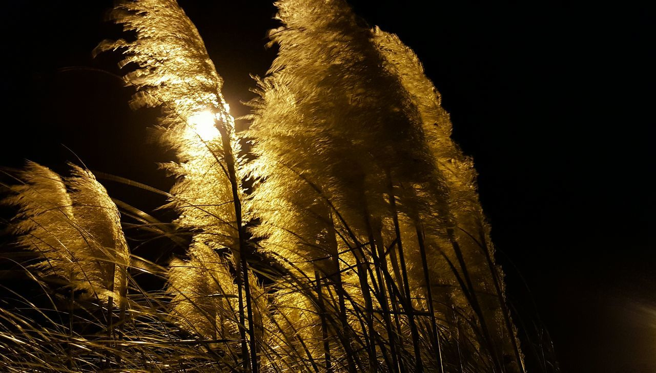 Close-Up Of Plants Against Sky At Night