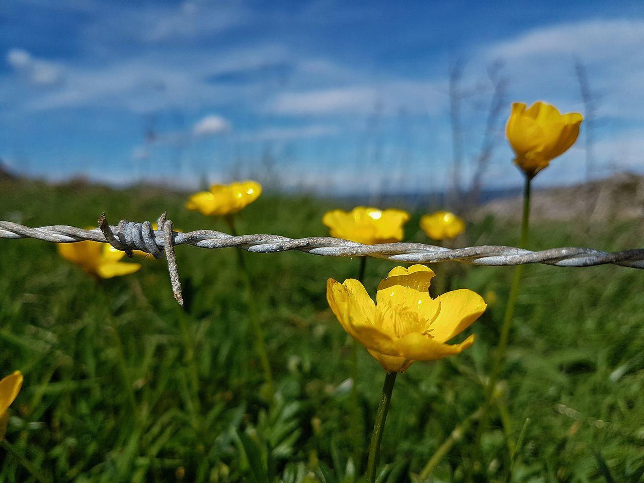 Flower Nature Plant Beauty In Nature Yellow Sky Flores Primaveragrafias Primavera2017 SPAIN EyeEmNewHere Cantabria