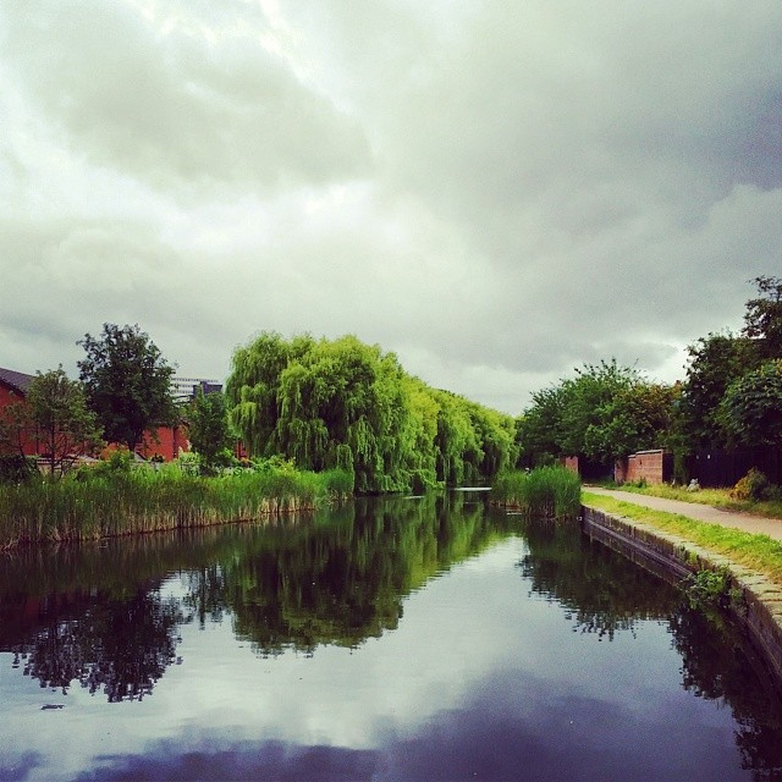 reflection, tree, water, sky, lake, tranquility, tranquil scene, cloud - sky, scenics, beauty in nature, waterfront, nature, cloudy, standing water, cloud, idyllic, growth, pond, green color, day