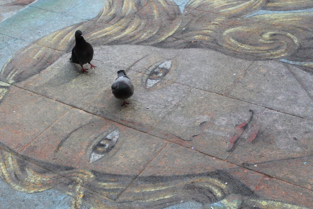 Street Drawing Woman Face Pigeon Bird Chalk Art Chalk Drawing City Scene Venice, Italy Street Art Woman Drawing Drawingart