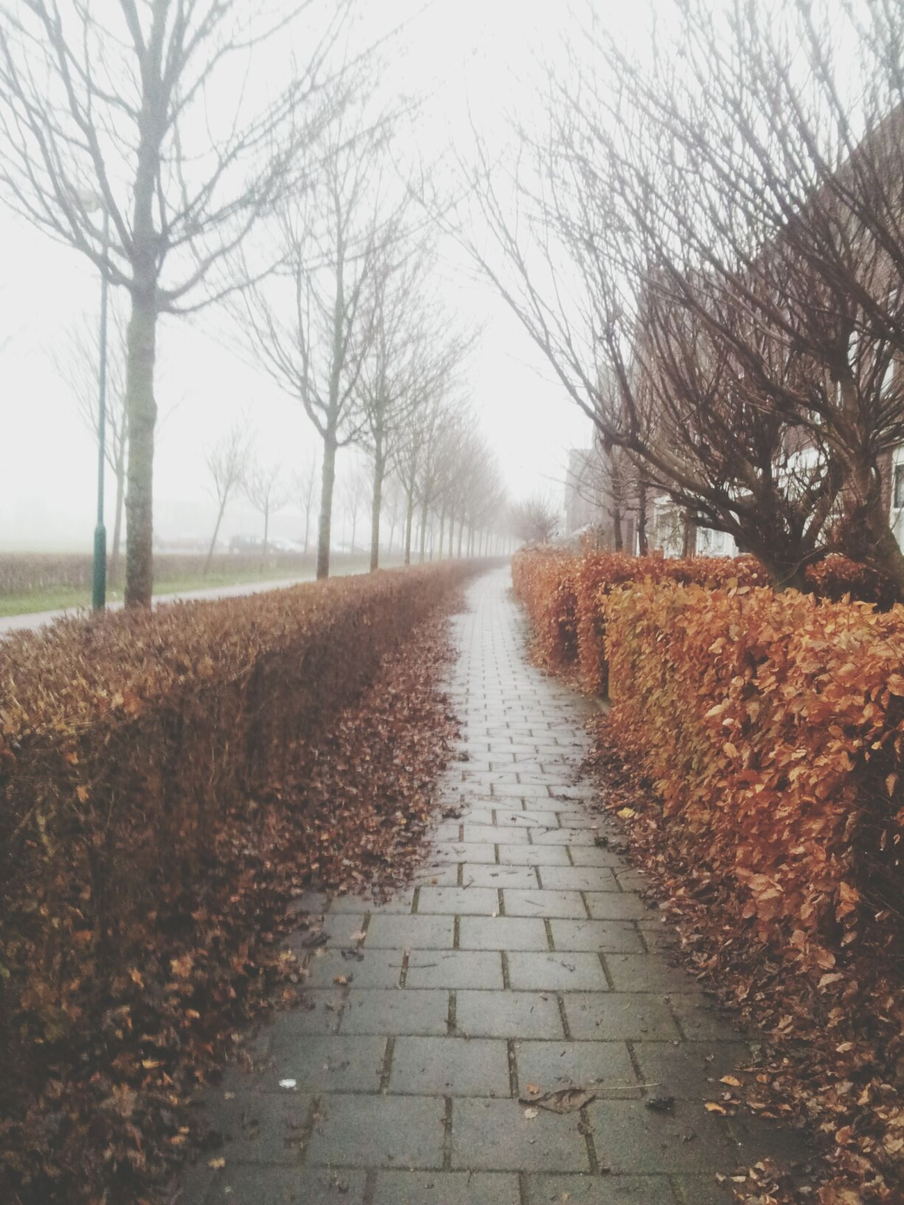 Winter is coming... Leaves Path No People