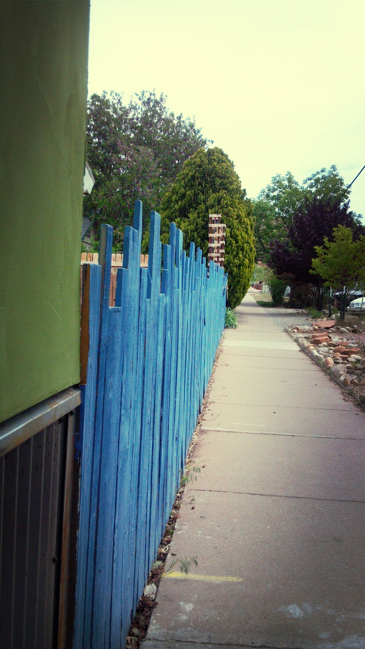 """Feeling Blue""...Boost filter... Eyeem Photography Day EyeEm EyeEm Team EyeEm Gallery Outdoors No People Eyeem Marketplace Eyeem Gallery Taking Photos. Boost Filter Green Color Blue Color Fence Art Contrasting Textures Contrasting Colors Nature Art Is Everywhere EyeEm The Best Shots EyeEmBestPics Perspective View Down The Line Down The Lane EyeEm Best Shots Down The Street Blue Fence"