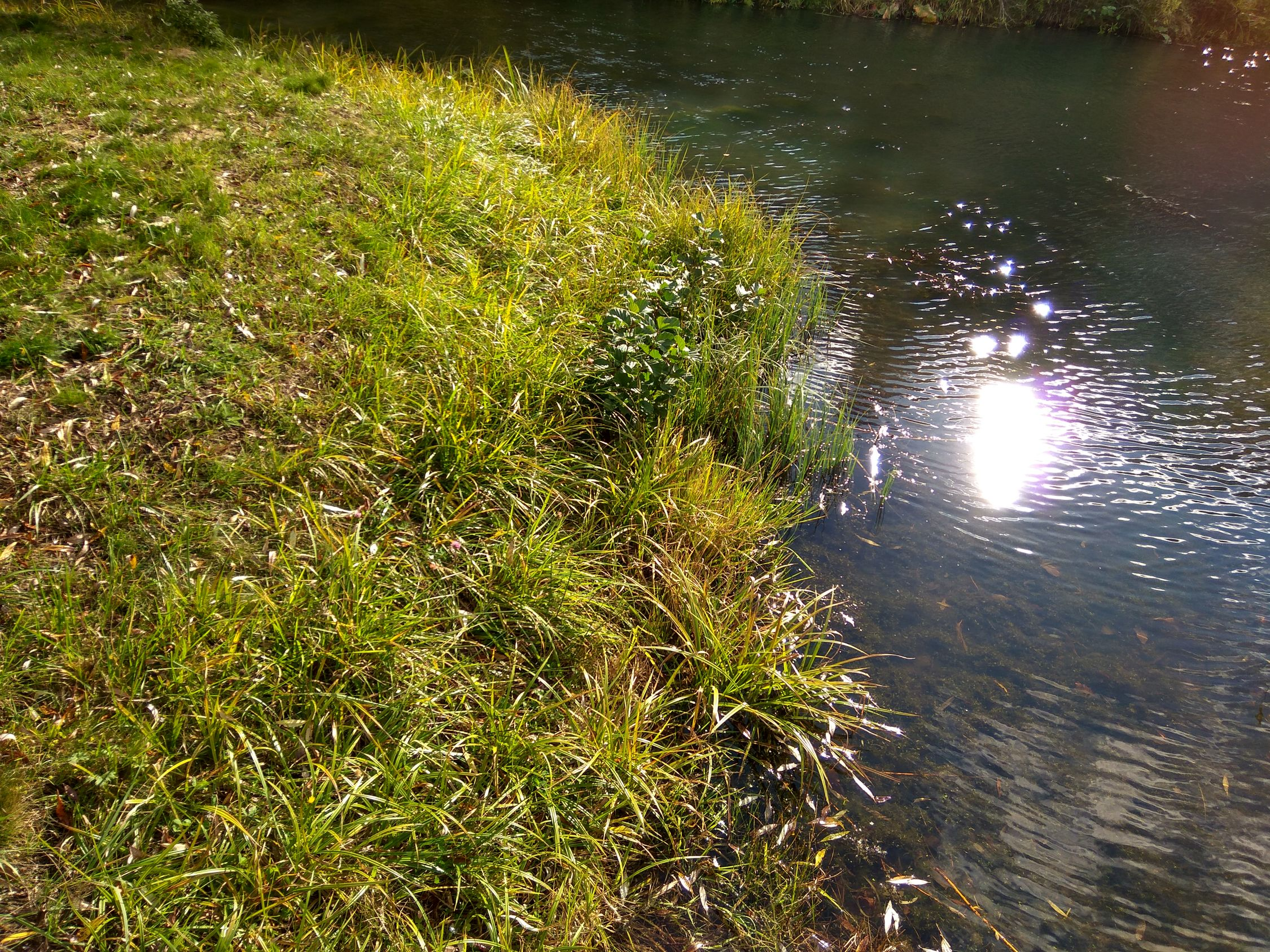 Травушка-муравушка Grass Green Color Sunlight Nature Beauty In Nature Water Reflection Tranquility Scenics Tranquil Scene Full Frame Fragility Moss Plant Green Day Non-urban Scene Freshness Growing