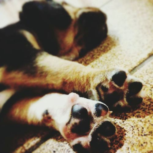 - O bom seria se todos os humanos pudessem ver a humanidade perfeita de um cão.🐾❤ JéssicaCaroline 📷❤ Loveanimals❤️ Dog🐾❤ Lovephotos Dogs Dogslife DogLove Dogphoto Animal Love Dog Life Dogstagram