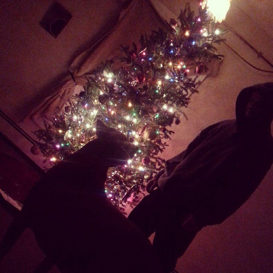 Lovemyboys Christmastree Happiness Love