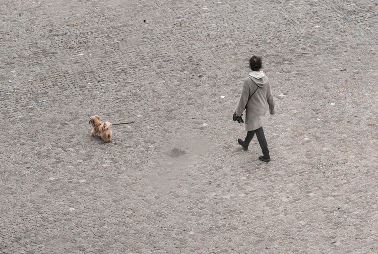 Almost Monochrome Public Square Woman Adult Cobblestone Day Dog Full Length High Angle View Leash Mammal One Man Only One Person Outdoors People Rear View Small Dog Standing Walking