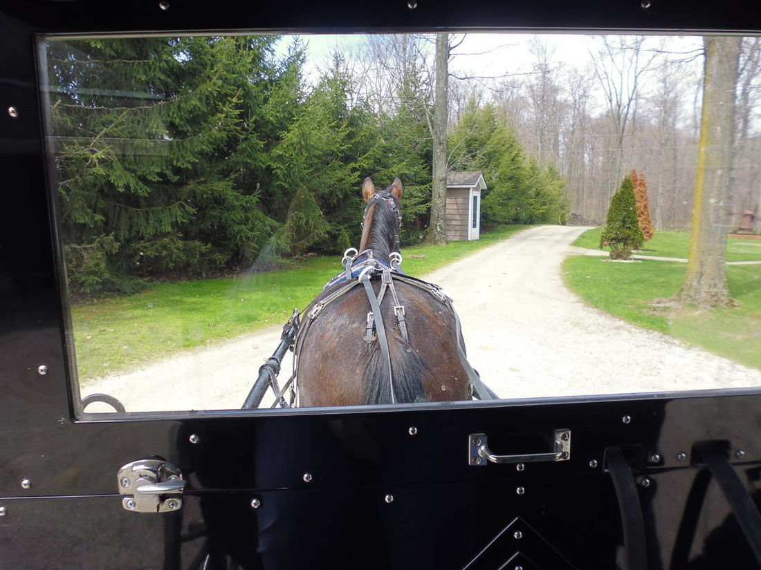 Amish Country - Amish Life - Amish Horse and Buggy Amish Buggy Amish Buggy Ride Amish Community Amish Horse And Buggy Amish Photography Geauga County MiddleField, Ohio🌼 Ohio, USA Susan A. Case Sabir The Amish Unretouched Photography Amish Amish Country Amish Family Amish Horses Amish Life Courtesy Jon Hershberger Day Geaugacounty Horsedrawn Horsedrawncarriages Outdoors