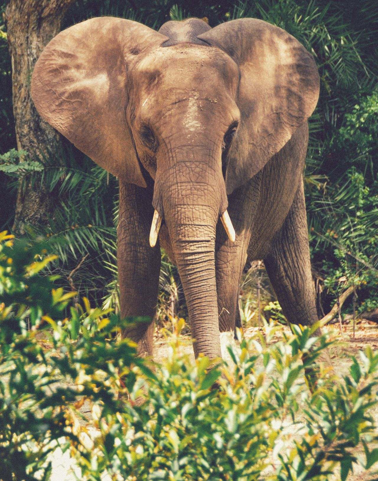 Elephant Animal Themes Nature One Animal No People Animal Trunk Front View Animal Wildlife Outdoors Mammal Day Tusk