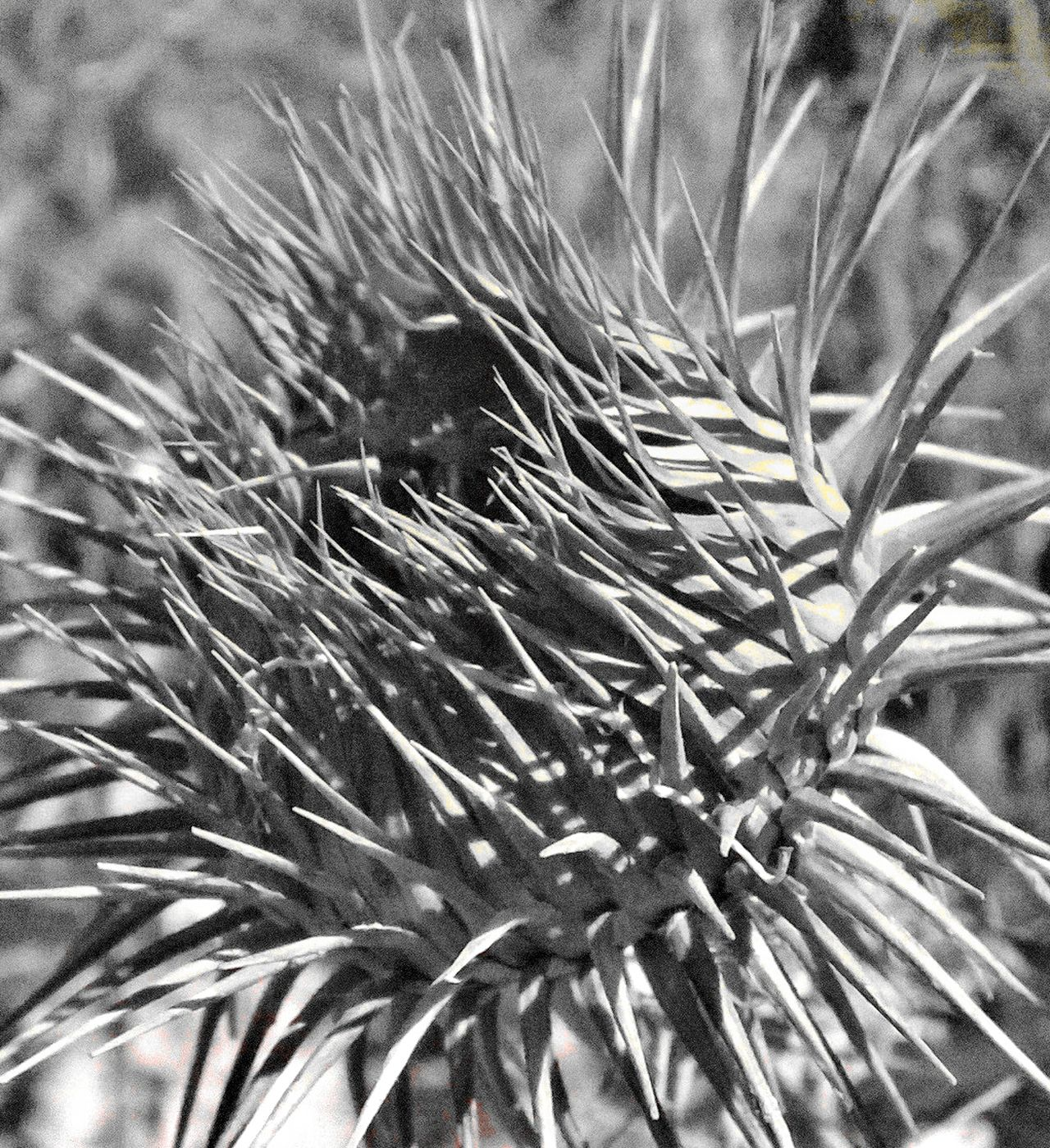 Growth Close-up No People Backgrounds Nature Plant Full Frame Outdoors Agriculture Day Ear Of Wheat Beauty In Nature Espinas GetbetterwithAlex EyeEm Gallery Cardo Textured