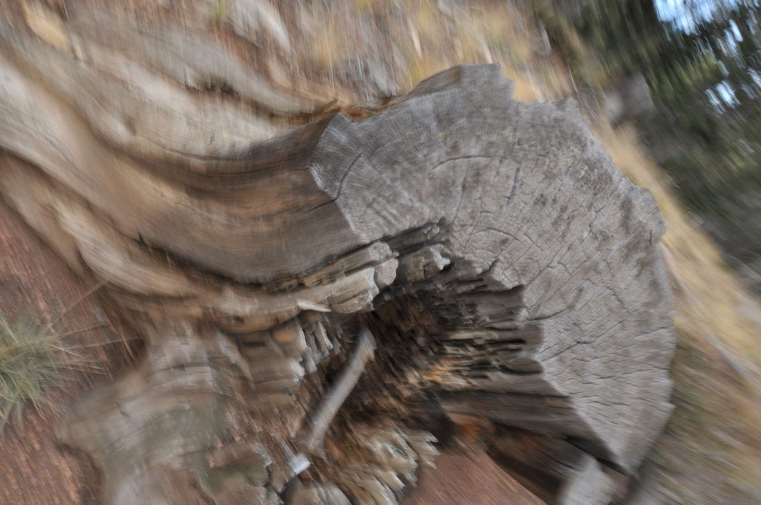Backgrounds Brown Close-up Day Log Nature No People Outdoors Textured  Tree Tree Ring Tree Stump Wood - Material