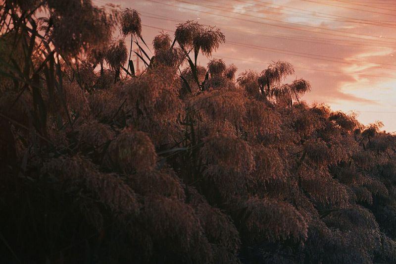 Sunset Nature Tree Beauty In Nature Cloud - Sky Cloud Plant Outdoors Sun VSCO Colorful Goodvibrations Travel Destinations Naturelover Riverscape Naturelovers Mountain Peace Travel Peaceful View Tree Nature Sky Goodvibes Beauty In Nature