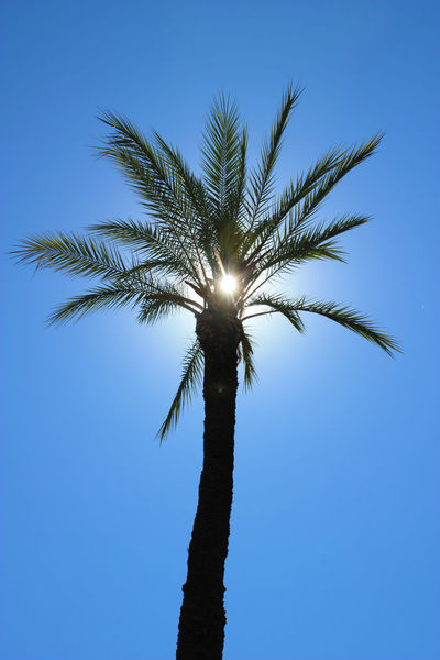 Palm Travel Tropical Paradise Vacations Beauty In Nature Blue Clear Sky Day Growth Low Angle View Nature No People Outdoors Palm Tree Paradise Scenics Sky Sun Sun Behind The Tree Tree Tree Trunk Tropical Tropical Climate An Eye For Travel
