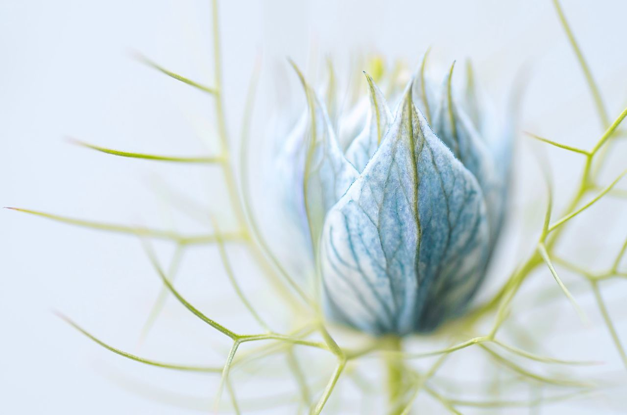 Beautiful stock photos of macro, Beauty In Nature, Beginnings, Bud, Close-Up