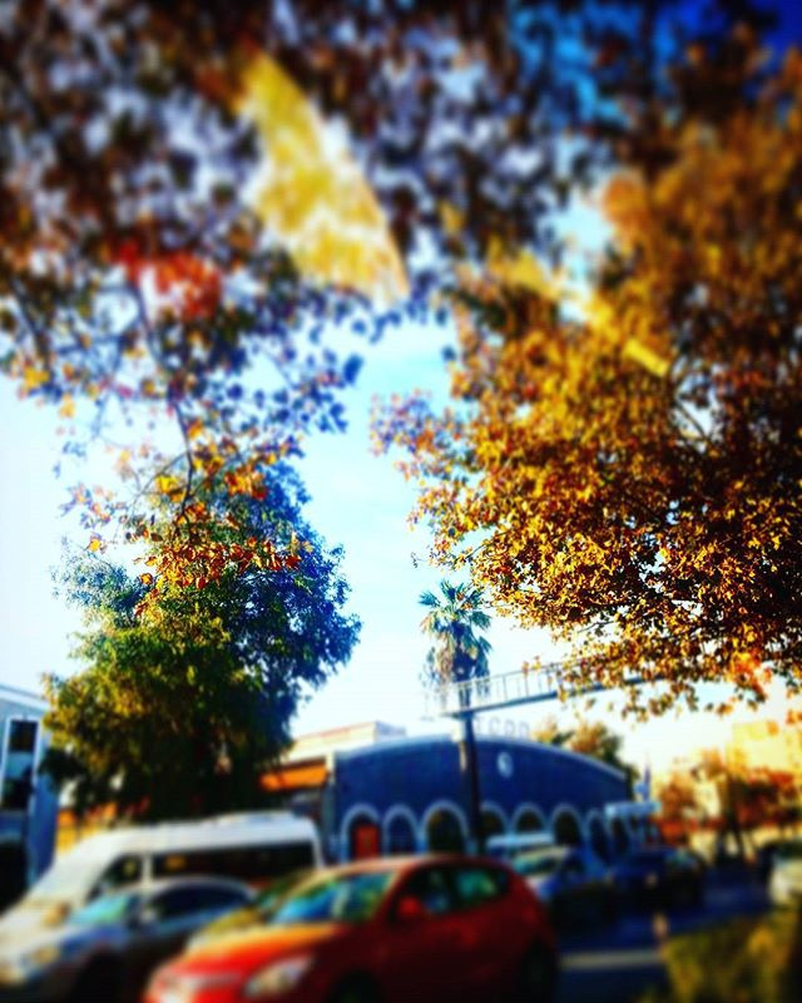 tree, autumn, change, selective focus, season, focus on foreground, leaf, branch, transportation, car, street, day, focus on background, nature, growth, outdoors, no people, leaves, built structure, close-up