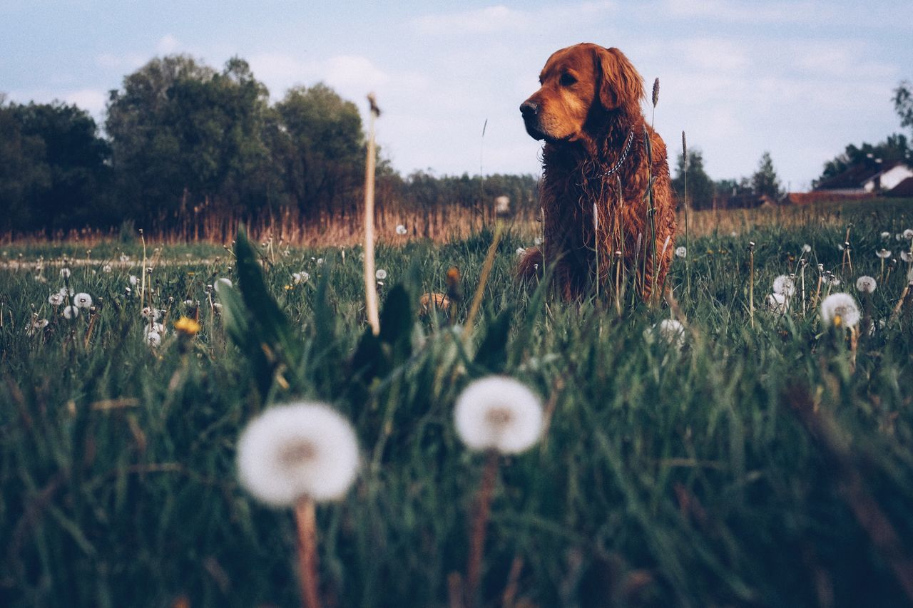 Dog Pets Domestic Animals One Animal Animal Themes Mammal Nature Day No People Grass Growth Outdoors Beauty In Nature Close-up Sky Wildflower Grass Spring Green Color EyeEm Best Shots Fujifilm_xseries The Great Outdoors - 2017 EyeEm Awards