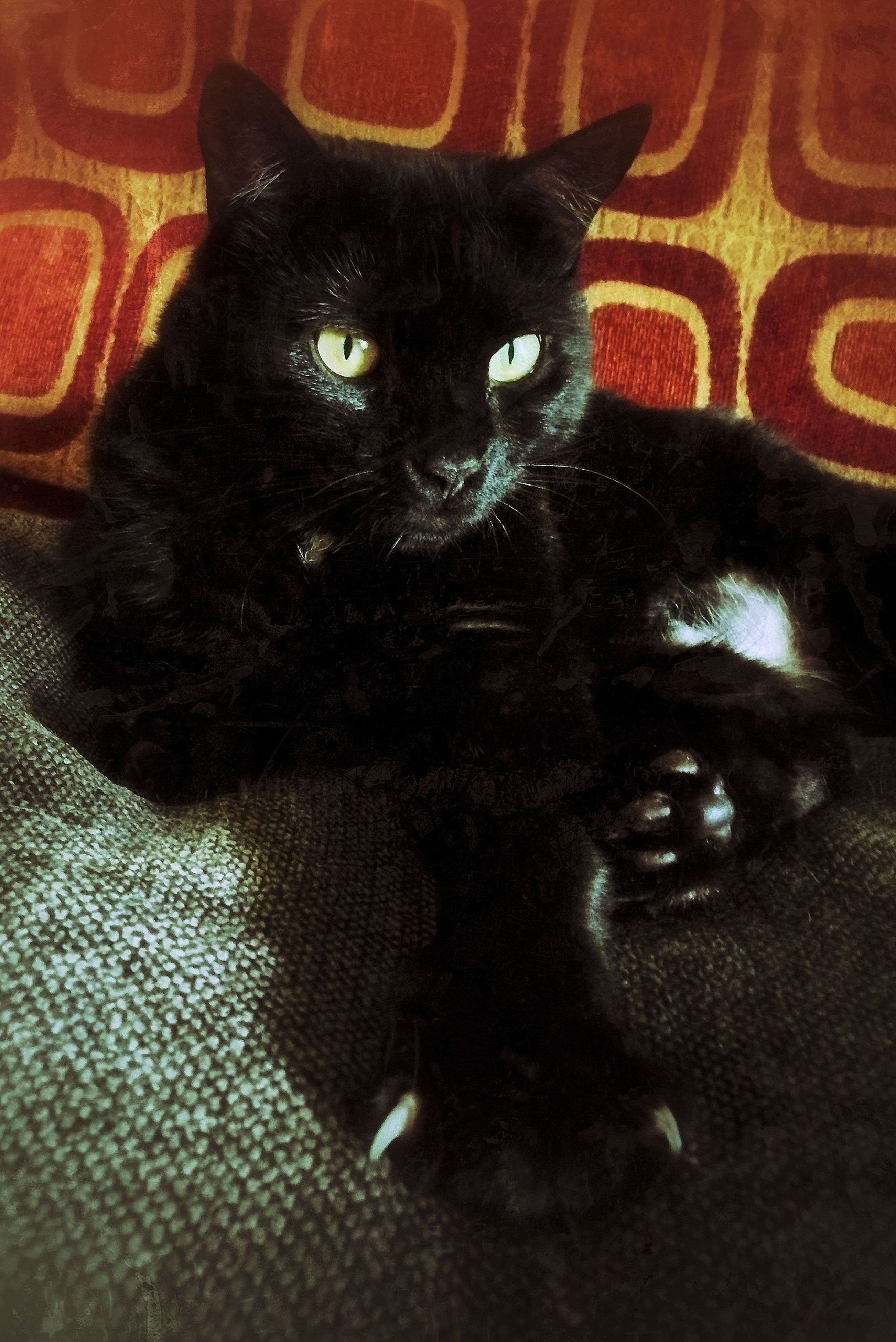 pets, domestic animals, indoors, animal themes, one animal, mammal, domestic cat, portrait, looking at camera, cat, black color, relaxation, feline, close-up, sofa, home interior, whisker, animal head, lying down, bed